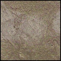 Sand Dollar, 15 ml Jar Primary Elements Arte-Pigment